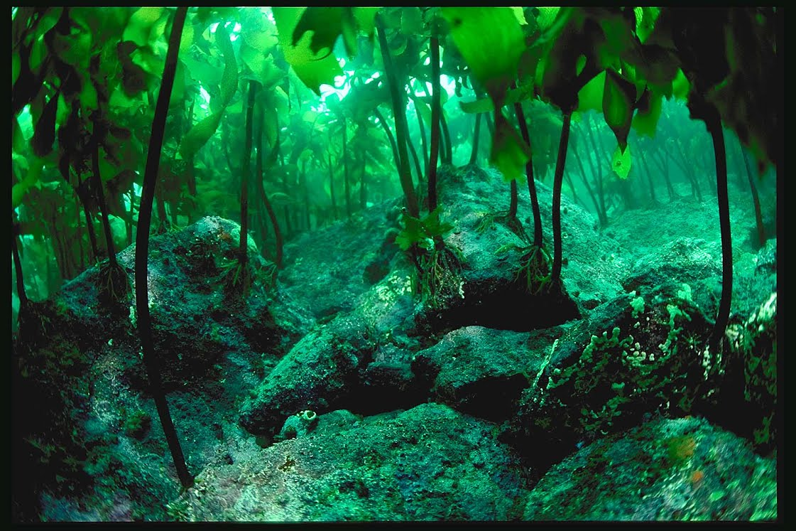 What are Kelp Forests? - Exploring the Ocean: Kelp Forests
