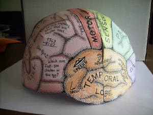 Brain Cap The Teenage Brain
