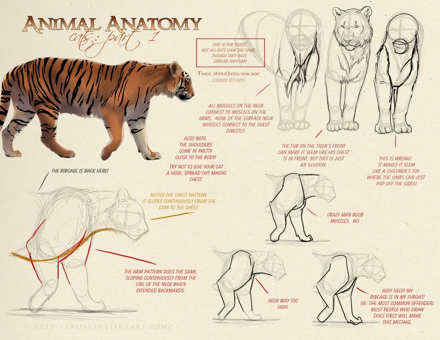 Anatomy and Biology - The Scrum Zoo: Eye of the Tiger