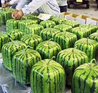 Coco Watermelon Fruit Salad Tree Facts About Fruits