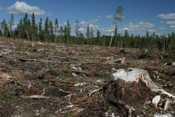 Lumber Harvesting Effects on Environment - Fair Trade Lumber