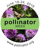 national pollinator week image