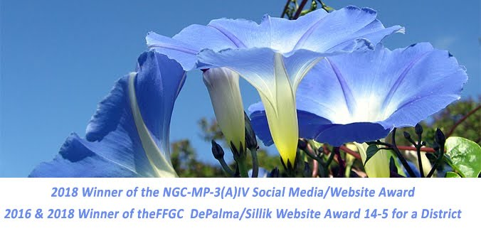 Award Winning-Website