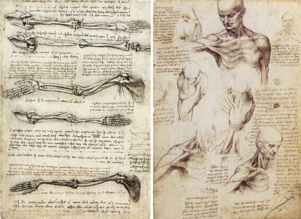 pencil drawing studies anatomy leonardo da vinci