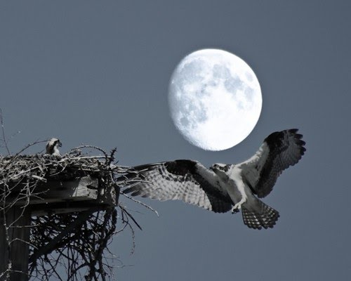 digital photo moon bird nest