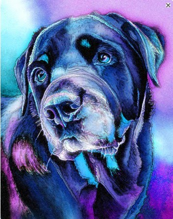 modern pet portrait of a dog in blue purple and black
