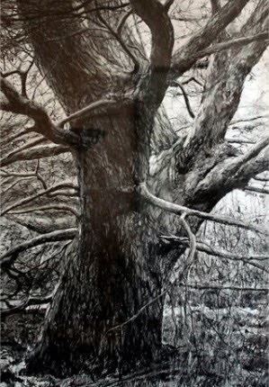 great drawing of a tree in the forrest by artist trevor jones