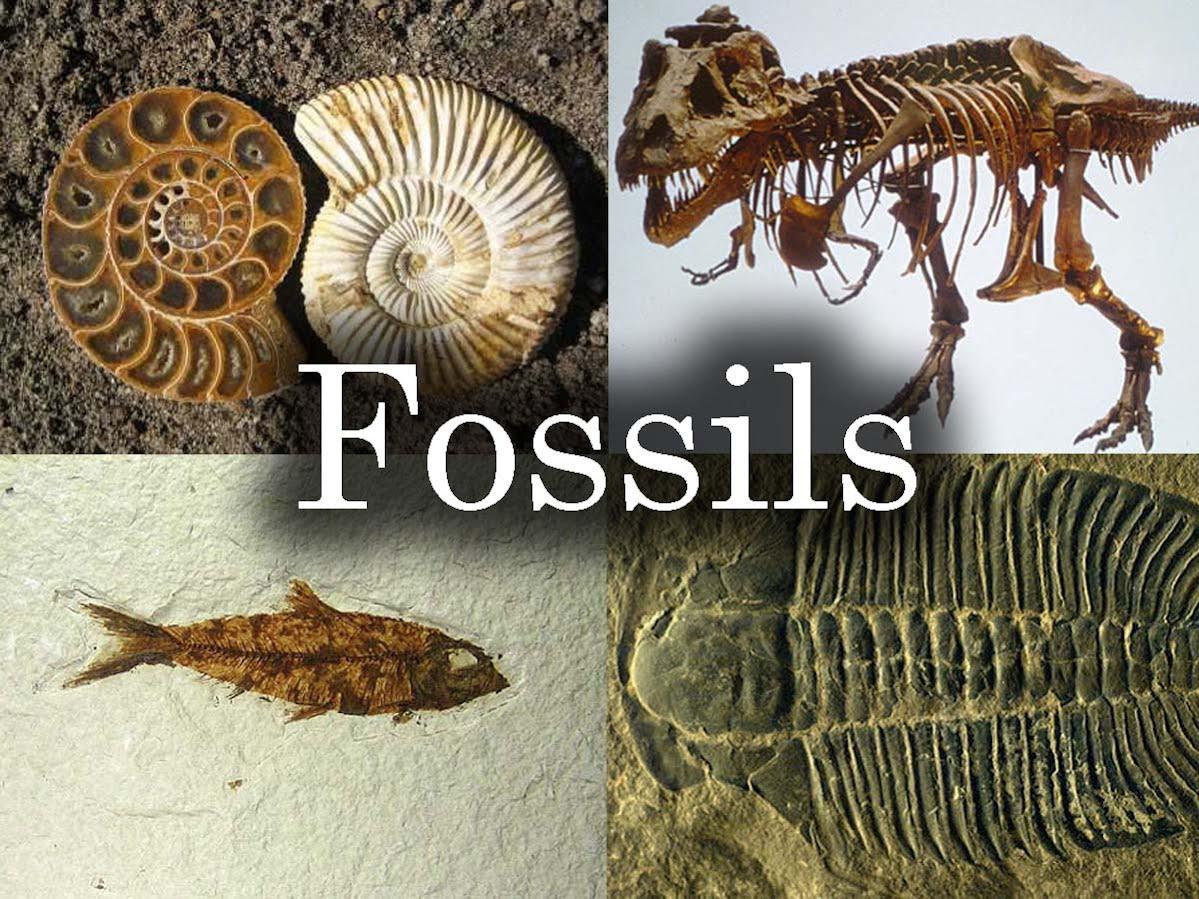 fossil info
