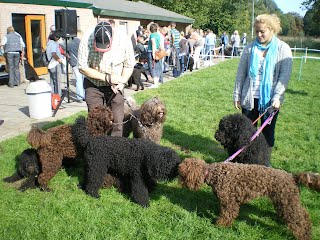 French Water Dogs Uk