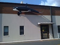 Orca over the front door