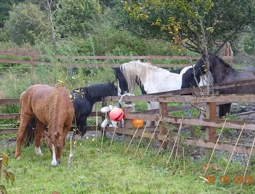 We now have 5 rehomed ponies