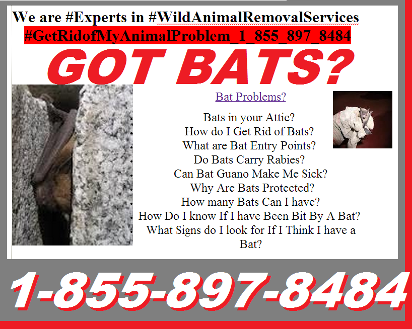 #Bat_Problems? #Bats_In_Your_Attic?  #How_do_I_Get_Rid_of_Bats?  #What_Are_Bat_Entry_Points?  #Do_Bats_Carry_Rabies?  #Can_Bat Guano Make Me Sick?  Why Are Bats Protected? How many Bats Can I have? How Do I know If I have Been Bit By A Bat?  What Signs do I look for If I Think I have a Bat?