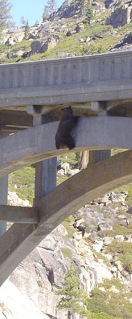 Bear Crossing The Bridge