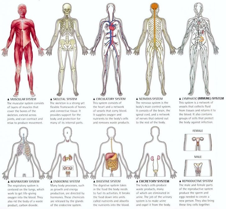 Phase 1 Exploring Body Systems Gr 5 Human Body