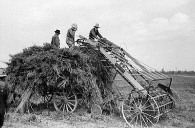 the farmers plight during the great depression Farmers and the new deal farmers in america did well out of the new dealthe farmers of america did not prosper in the so-calledroaring twentiesthey were simply too successful in that they produced far too much for the american market.