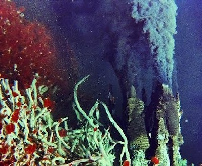 tubeworms chemosynthesis Dive and discover: deeper discovery vent biology infomod not long ago, scientists thought that life could not exist on the deep ocean floor then in 1977, scientists.