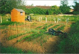 An allotment after some work has been done.