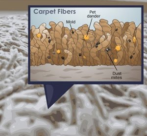 Germs In Your Carpet Guaranteed Carpet Services