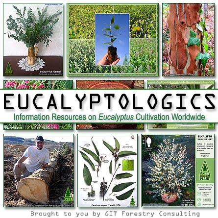 Eucalyptologics by Gustavo Iglesias Trabado, GIT Forestry Consulting, Consultoría y Servicios de Ingeniería Agroforestal, Lugo, Galicia, Spain, España / Eucalyptologics, Information Resources on Eucalyptus Cultivation Around the World / Recursos e informacion sobre el cultivo del eucalipto en el mundo