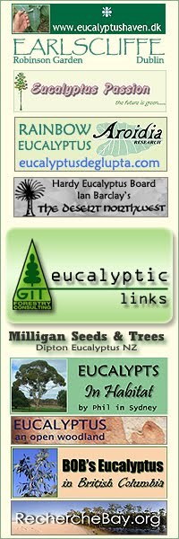 Eucalyptus-Passion.com - Howard Lloyd Eucalyptus nursery (France) /  EucalyptusHaven.dk - Frank Diron Eucalyptus and Exotic Plants Nursery at Fanø - Fanoe Island (Denmark) / Earlscliffe Gardens - a magnificient garden and Eucalyptus collection near Dublin with David Robinson (Ireland) / EucalyptusDeglupta.com - Rainbow Eucalyptus from the gardens of Florida, with Aroidia Research (USA) / SermaforChile: Ingenieria y Servicios de Manejo Forestal - with Gutierrez & Urrutia in Los Angeles, Angol and Temuco (Chile) / The Desert Northwest - Plant Adventures with Ian Barclay near Seattle (USA) / Milligan Seeds and Trees - Dipton Eucalyptus - with Heather and Graham Milligan in Southland (NZ) / Hardy Eucalyptus Board - Public forum for discussion, by Ian Barclay (USA) / Eucalypts in Habitat - Australian landscapes with Phil in Sydney (Australia) / Eucalyptus, an open Woodland - Australian landscapes with Brewer and Tiley in Melbourne (Australia) / Bobs Eucalyptus - Australian Gardening in British Columbia (Canada) / Biohabitats Inc, from Baltimore (USA) / Recherchebay.org - Saving the footprints of Citizen Labillardiere with Bob Brown (Tasmania)// GIT Forestry Consulting, Consultoría y Servicios de Ingeniería Agroforestal, Galicia, España, Spain / Eucalyptologics, information resources on Eucalyptus cultivation around the world / Eucalyptologics, recursos de informacion sobre el cultivo del eucalipto en el mundo
