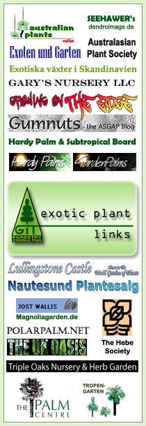 Australian Plants Online - the online magazine of the ASGAP (Australia) / Dendroimage - Dendrological Plant Image Gallery & Arboretum with Gerd Seehawer (Germany) / Exoten und Garten - Exotic Plant Discussion Board with Thomas von Hamburg (Germany) / Gary's Nursery - Palm Paradise in New Bern with Gary Hollar (USA) / Growing On The Edge.net - Exotic Plant Discussion Board with Peter Richardson (Australia) / GUMNUTS, the ASGAP Blog - with Brian Walters (Australia) / Hardy Palm & Subtropical Board - Exotic plants accross the States - with Bob in Winston-Salem (USA) / HardyPalms.org - Palm & Subtropical Forum (USA) / Lullingstone Castle - Gardening The World with Tom Hart Dyke (UK) / Magnoliagarden.de - Tecklenburg's Exotengarten with Jost Wallis (Germany) / Nautesund Plantesalg - Rhododendron & Exotic Plants with Håkon Vangsnes (Norway) / The Australasian Plant Society - ANZACS overseas with Jeff Irons (UK) / The Hebe Society - NZ Plants take over the world with Tony Hayter (UK) / The Palm Centre - Palms, bamboo, bananas, ferns & other exotics with Martin Gibbons (UK) / The Polar Palms Nursery - Exotics in the Snow with Kiril Donov (Bulgaria) / The UK Oasis - Tropical & Exotic Plants with Paul Spracklin (UK) /  Triple Oaks Nursery & Herb Garden - Exotic plants in New Jersey with Joe Kiefer (USA) / Tropengarten - Exotic Plants in Wuppertal with Michael Lorek (Germany) // GIT Forestry Consulting, Consultoría y Servicios de Ingeniería Agroforestal, Galicia, España, Spain / Eucalyptologics, information resources on Eucalyptus cultivation around the world / Eucalyptologics, recursos de informacion sobre el cultivo del eucalipto en el mundo