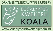 Eucalyptus Kwekerij Koala, De Pol, Nederland / Gespecialiseerd in vorstbestendige soorten Eucalyptusbomen / www.eucalyptuskwekerijkoala.nl / Koala Eucalyptus Nursery, De Pol, Netherlands / Specialties in Ornamental Eucalypts / Vivero Ornamental de Eucalipto Koala, De Pol, Holanda