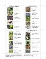 Example of PDF Birds of IL Answer Chart