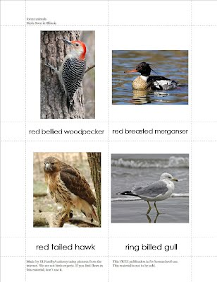 PDF Example of our Birds Seen in Illinois flashcards