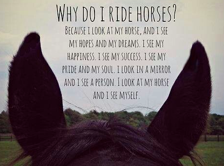Horse Quotes Horse/Riding Quotes   Hazel Horse Quotes
