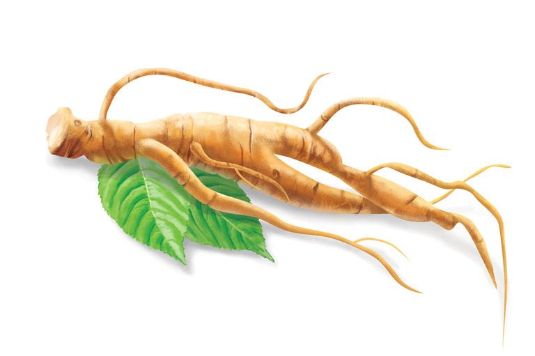Is ginseng an aphrodisiac