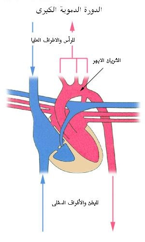 The heart for Home circulation system