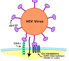 What is the significance of a white blood cell count with regard to HIV?