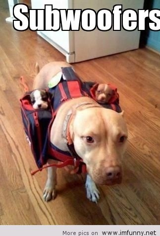 Dog-father-of-the-year.jpg