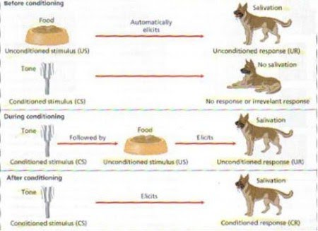 Classical Conditioning Hook Ap Psychology 2a