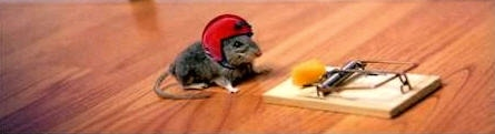 Mouse with helmet