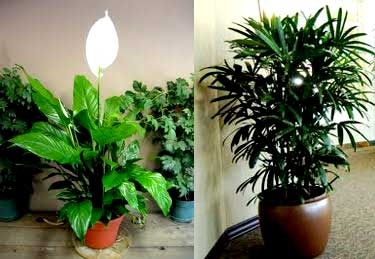 office indoor plants. Indoor Office Plants Dubai