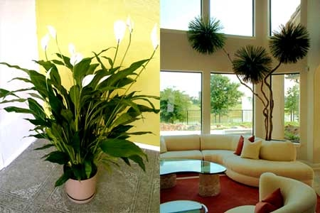 Indoor House Plants Care