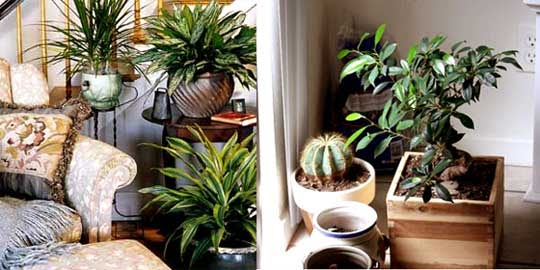 Indoor Gardening Tips Indoor Plants Dubai Garden Maintenance UAE