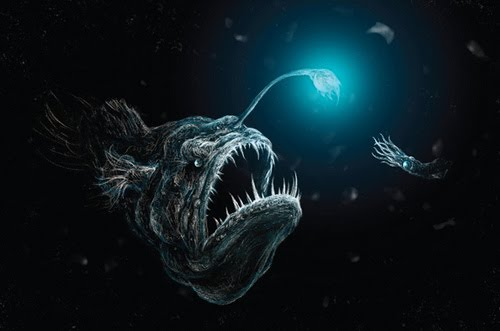 Angler fish information on few queer fish for What is an angler fish