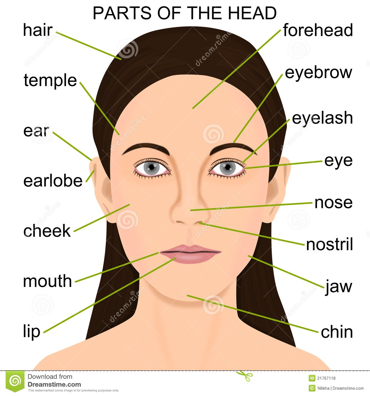 Die Gesichtsteile - Parts of the face/head Flashcards ...