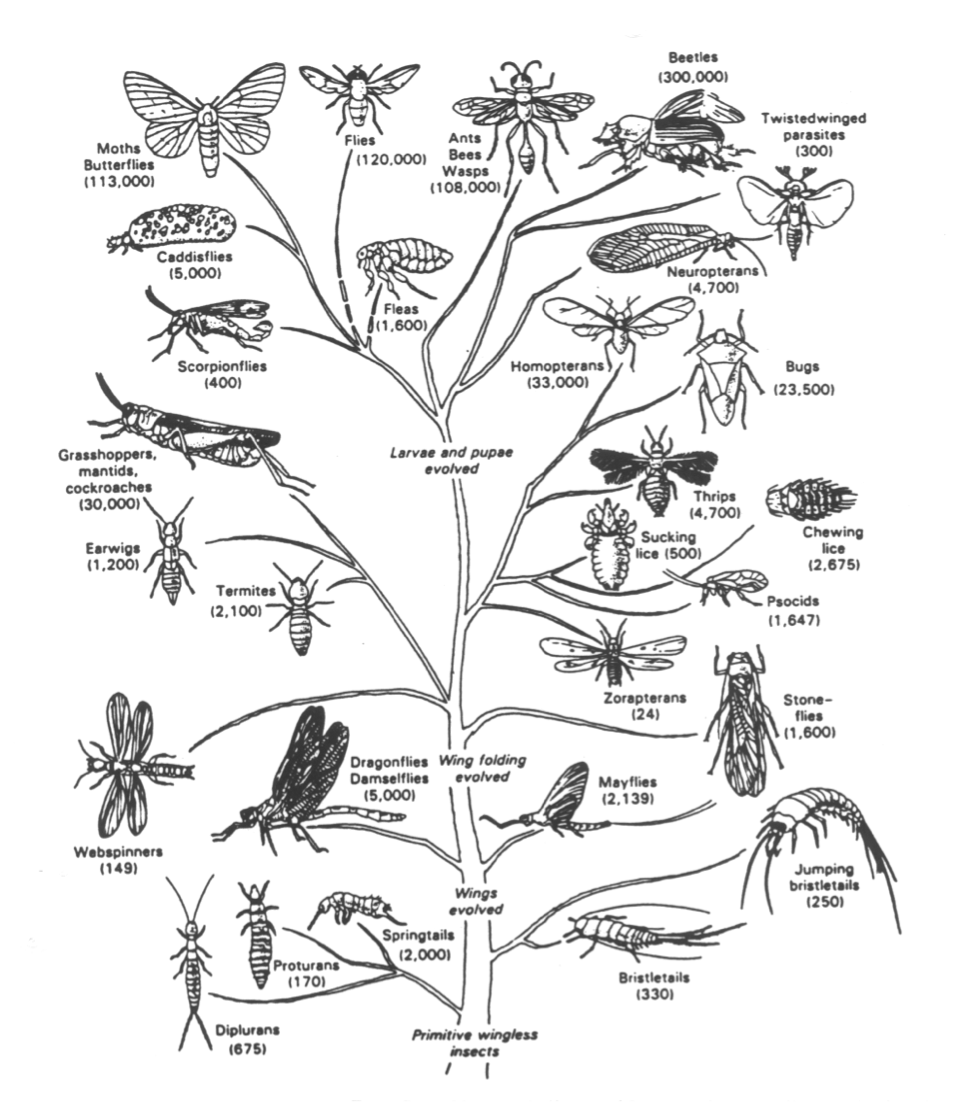 Image result for insect orders