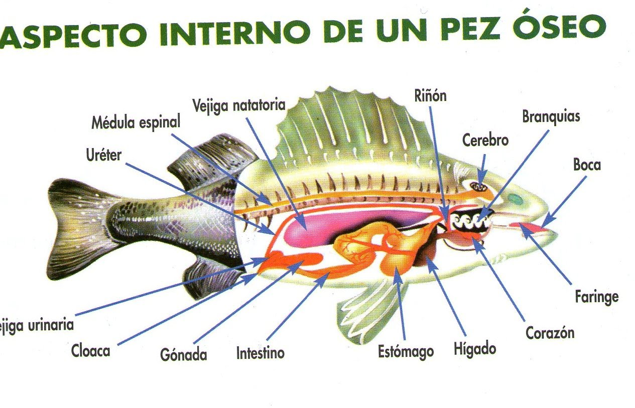 Peces by Andy Leal Girón on Prezi