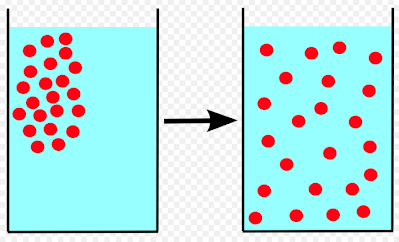 diffusion across a biological membrane