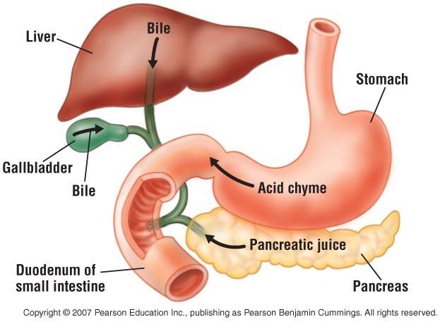 some of appendix e