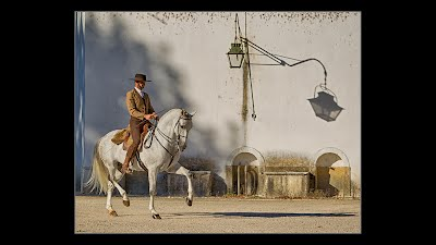Photo of a Lusitano horse Passaging next to the shadow of a lamp