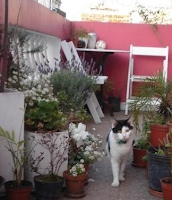 Carlito in the garden