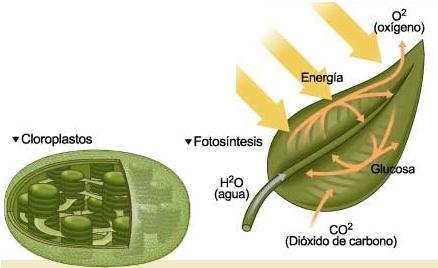 Resultado de imagen para dióxido de carbono plantas c3