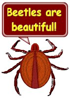 beetles are