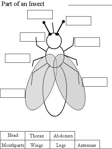 insect worksheet kids cicada killer wasps. Black Bedroom Furniture Sets. Home Design Ideas