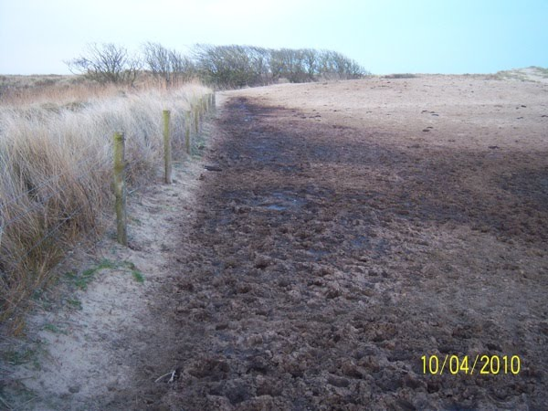 Edge of Ruined Dunes, Kilmuckridge: Marram grass clearly visible along the Stream
